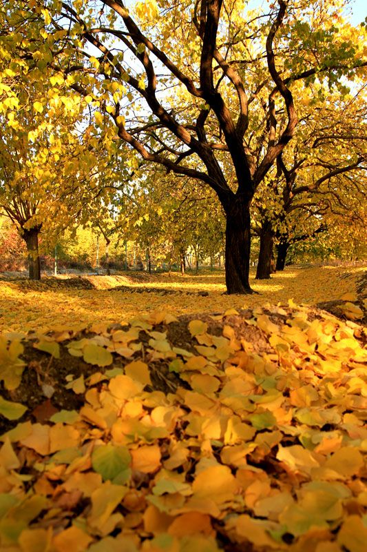 Autumn in Battalgazi, Malatya, East Anatolia_ Turkey #autumnleavesfalling