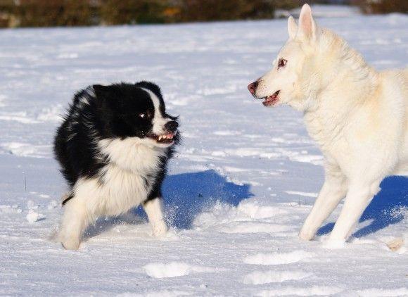 Seit einiger Zeit wird viel über die Beziehung vom Hund