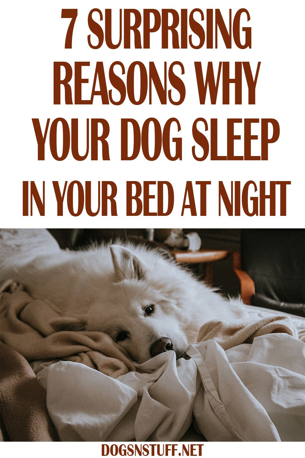 7 Amazing Reasons Why Your Dog Should Sleep In Your Bed At Night Dogs Sleeping Dogs Your Dog