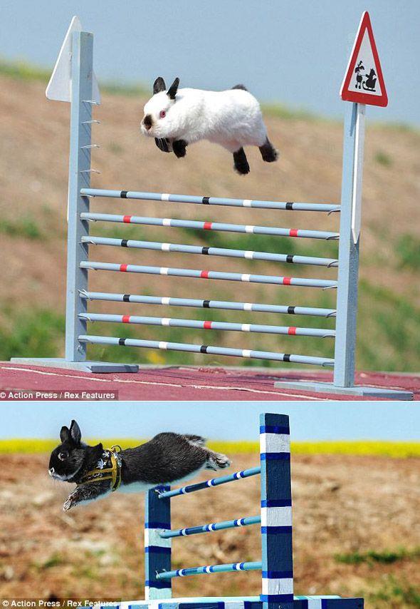 Freakish jumping bunny - love it!