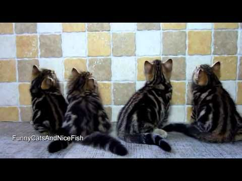 morning Funny Kittens   exercises for Cats - http://www.gigglefinger.com/morning-funny-kittens-exercises-for-cats/