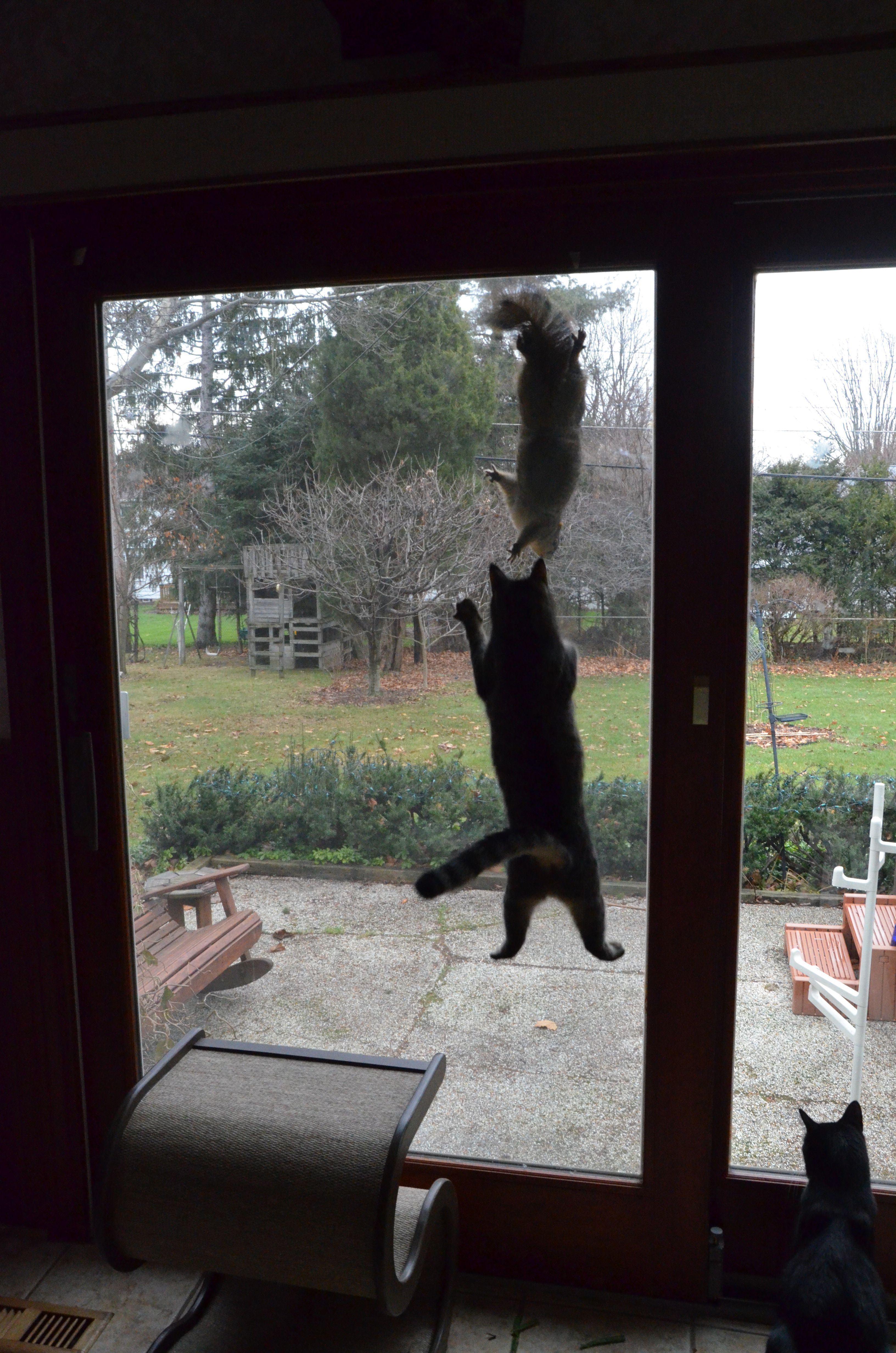 Inside Cat Squirrel On The The Screen Outside Cat Going Crazy Trying Katten Paarden En Hoeden
