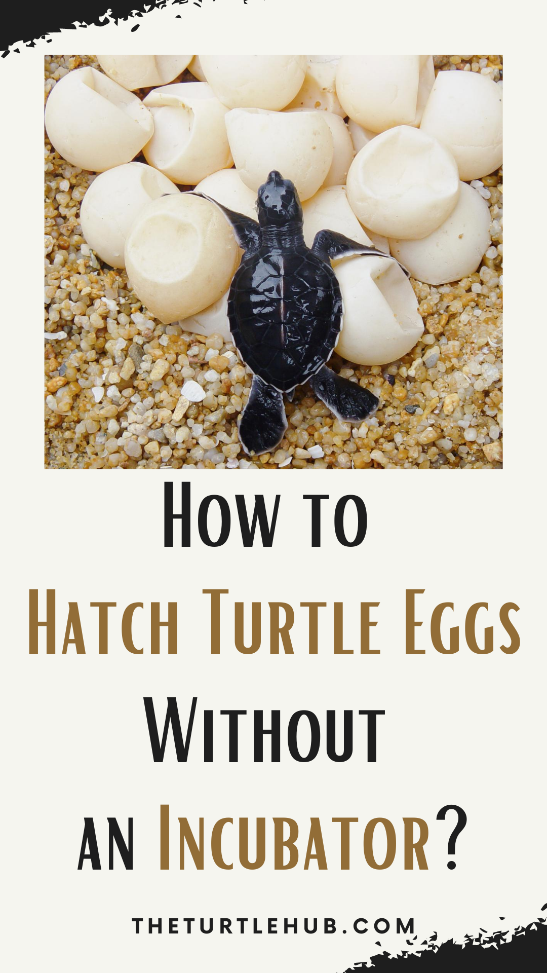 How To Hatch Turtle Eggs Without An Incubator In 2020 Reptile Eggs Reptile Incubator Eggs