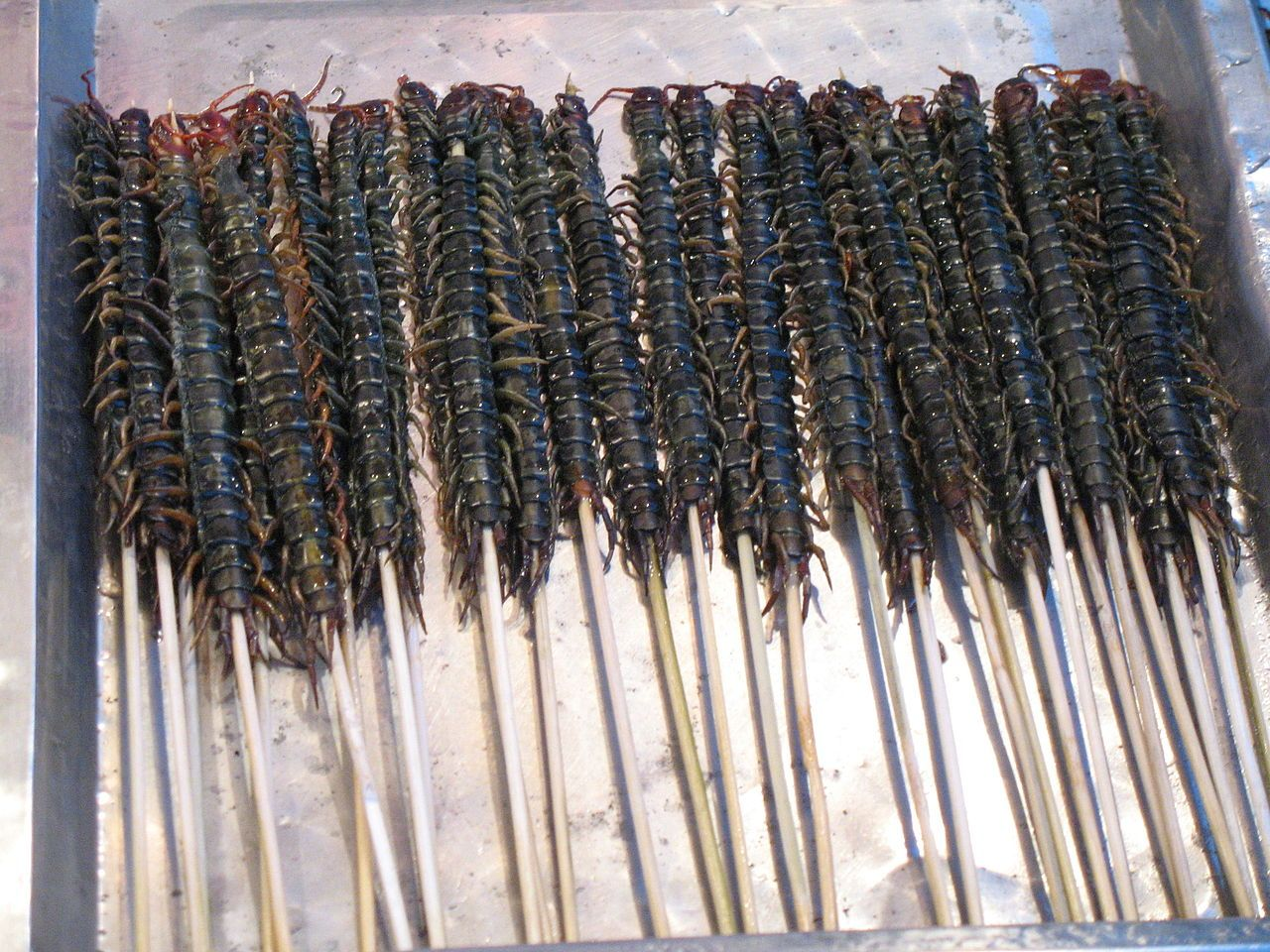 Centipede Edible insects, Edible bugs, Stink bugs