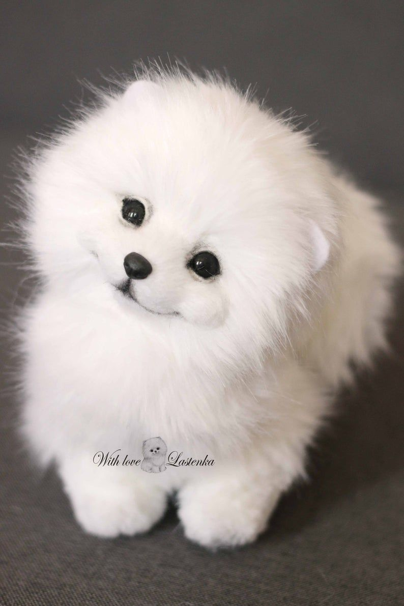 Cute Little Family Puppies Pomeranian Dog Dogs