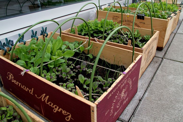 Marvelous How To Make A DIY Wine Box Planter For Your Urban Vegetable Garden   Using  Repurposed