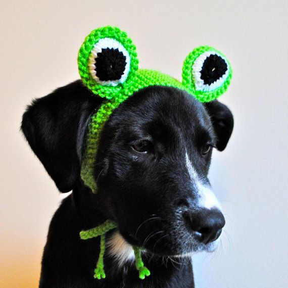 Frog Costume for Dogs Hand Knit Dog Hat Dog by bitchknits