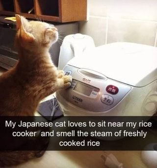 À VA y a My Japanese cat loves to sit near my rice cooker and smell the steam of freshly cooked rice - iFunny :)