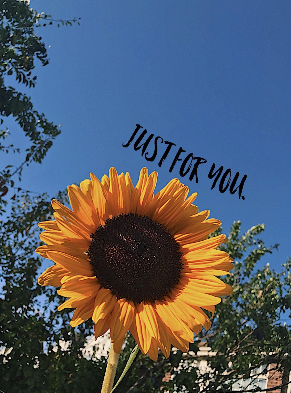 Cute Aesthetic Sunflower Wallpaper | 3D Wallpapers