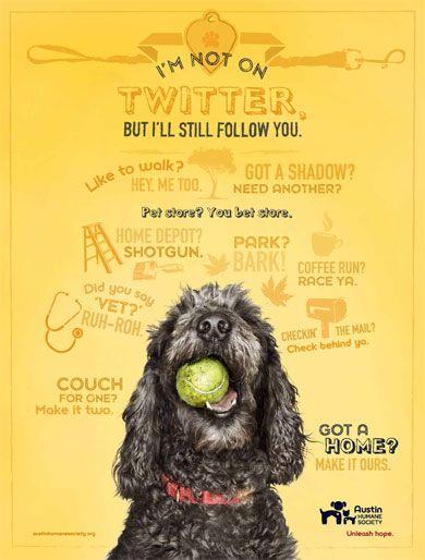 Shelters Do Better By Going Positive Animal Shelter Dog Adoption Austin Humane Society