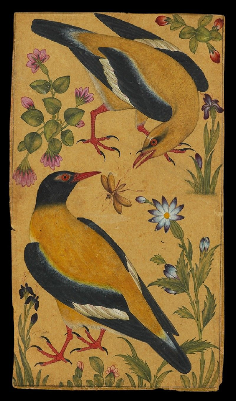 Two orioles (front)   © Ashmolean Museum, University of Oxford