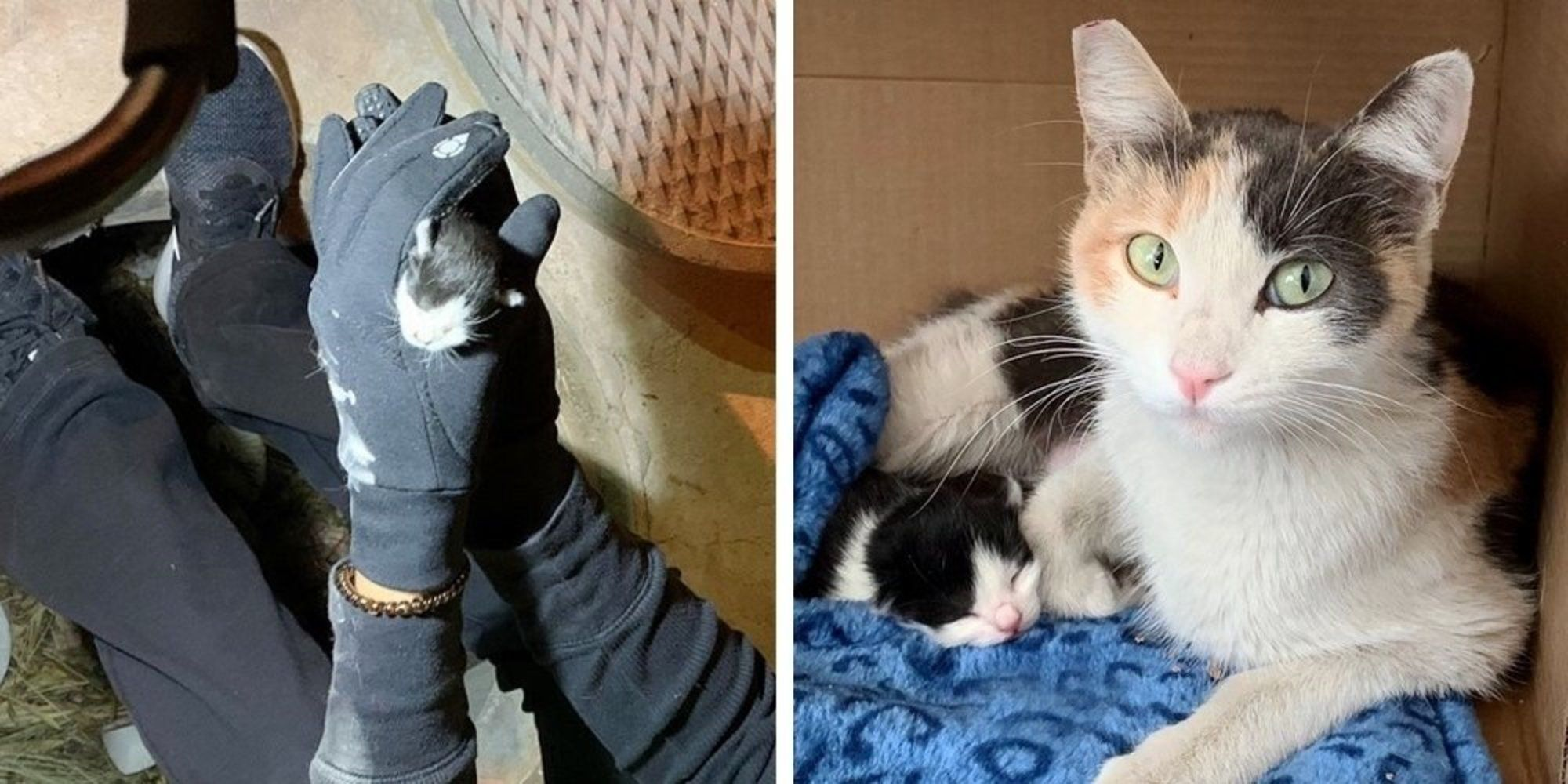 Kitten S Loud Cries Help Rescuers Find Her They Locate Her Cat Mom Too Cat Mom Kittens Cats