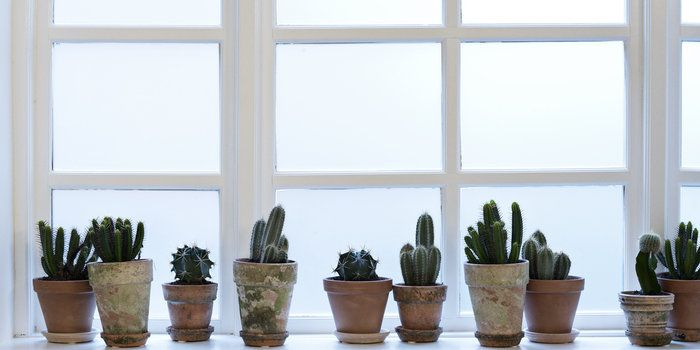 Elegant To Expand My Office Windowsill. Cactus Collection In Terra Cotta Pots.