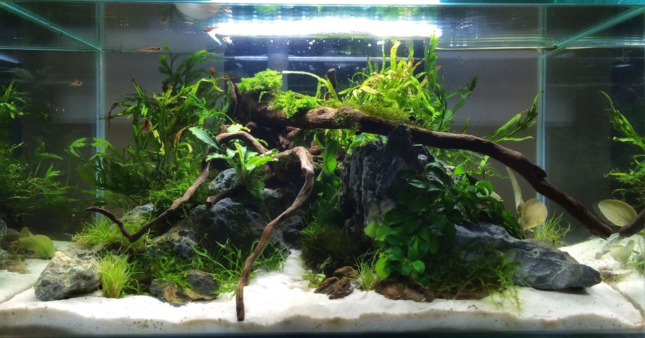 Freshwater aquarium fish dying after water change - 17 Best Images About Aquarium Opentop On Pinterest Making Connections Hanging Lights And Mini Aquarium