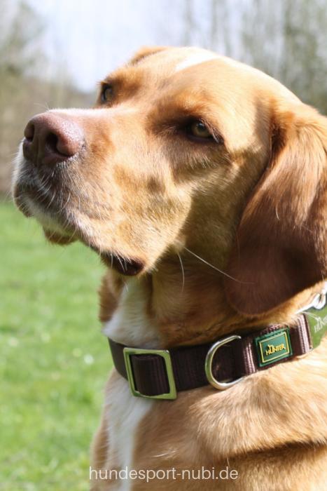 Halsband Hunter Vario Basic Alu Strong Braun Hunde Hundesport Hundchen Training