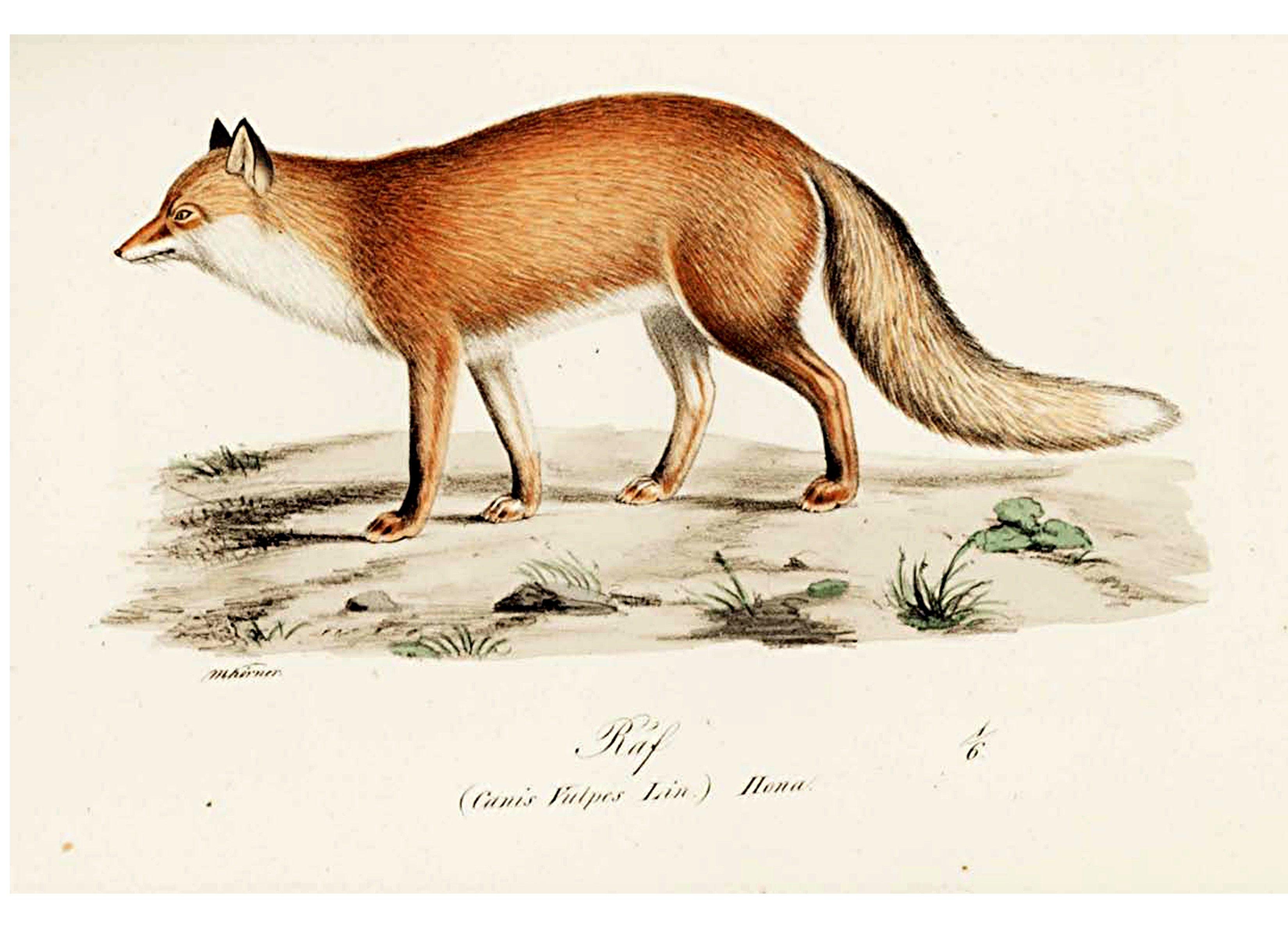 Animal Illuminerade Figurer Dog Fox 2 Vintage