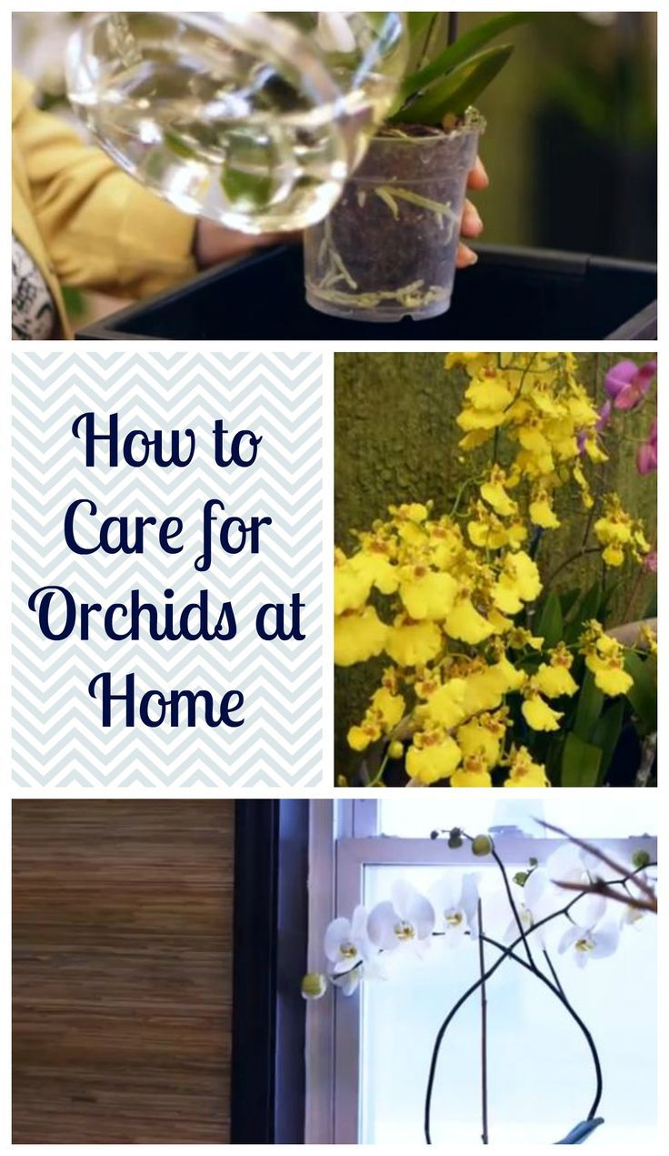 How To Care For Orchids At Home Indoor Gardening Plants Tips