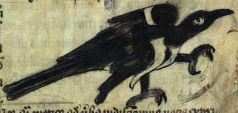 Medieval Bestiary : Magpie