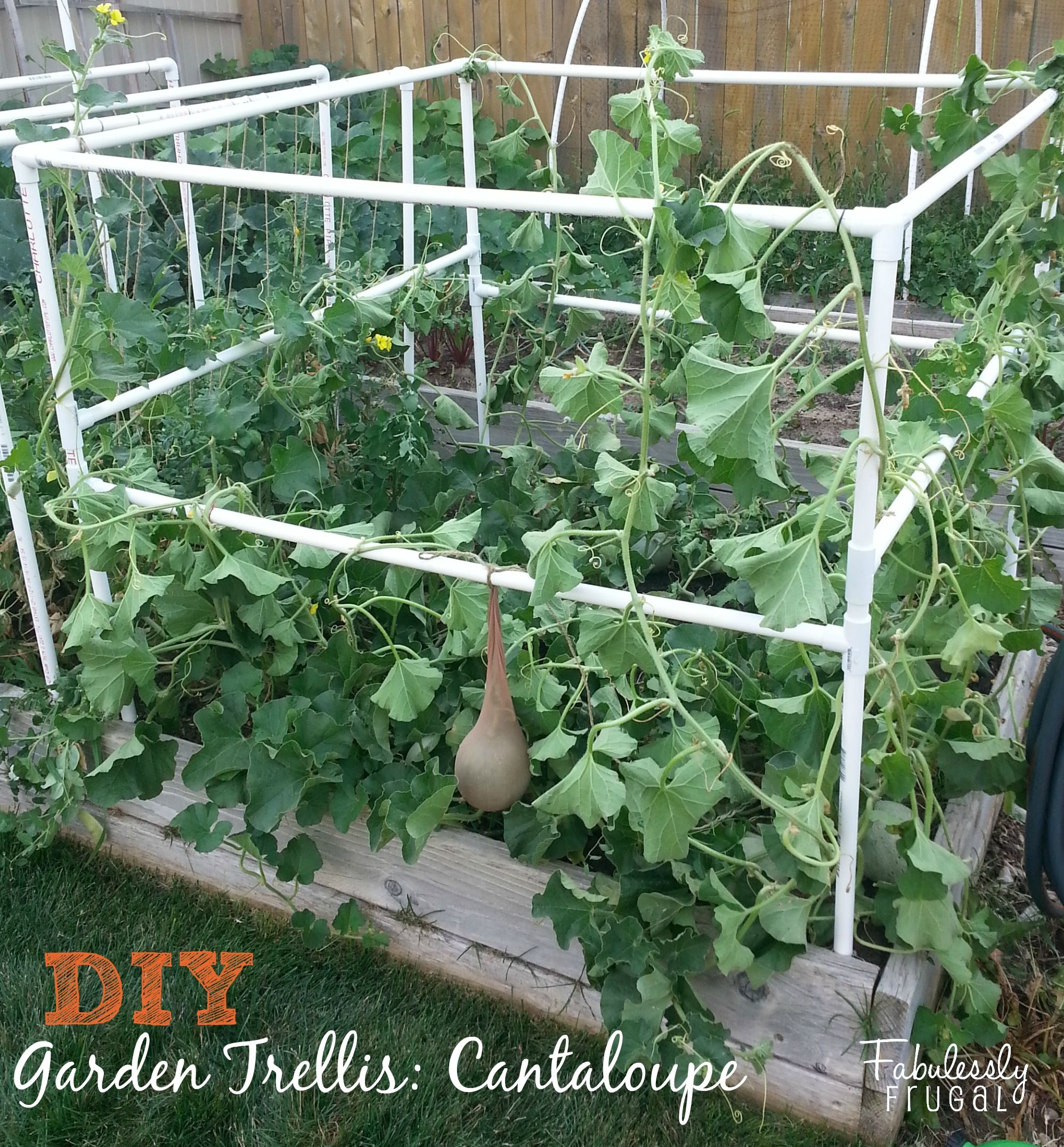 DIY Garden Trellis! (Part 2)