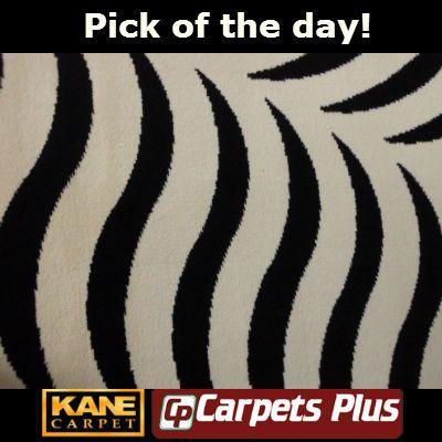 Carpets Plus - Kane Carpet - Pick of the day!