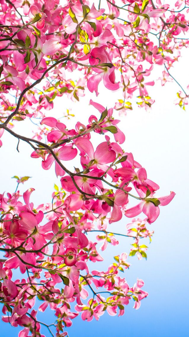 Wallpaper Iphone Spring Spring Wallpaper Beautiful Nature Wallpaper Bright Wallpaper Iphone beautiful spring wallpaper