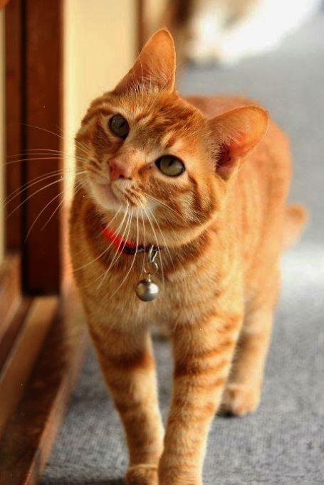 Marmalade Or Toast Dat S Beez De Question Orange Tabby Cats