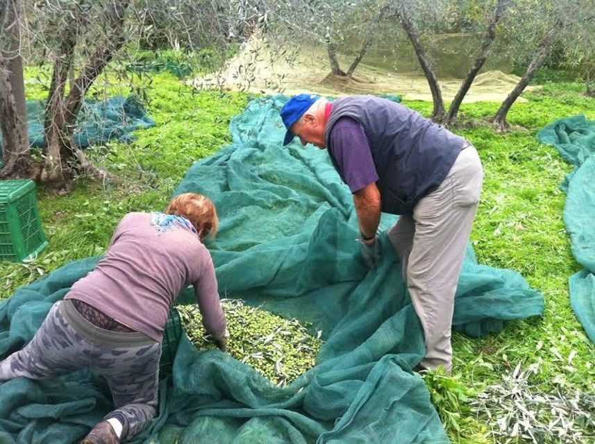 -ITALIA: Raccolta delle olive  by  Francesco-Welcome and enjoy- - #Expo2015 #WonderfulExpo2015 #ExpoMilano2015 #Wonderfooditaly #MadeinItaly #slowfood #FrancescoBruno    @frbrun  http://www.blogtematico.it  frbrun@tiscali.it    http://www.francoingbruno.it