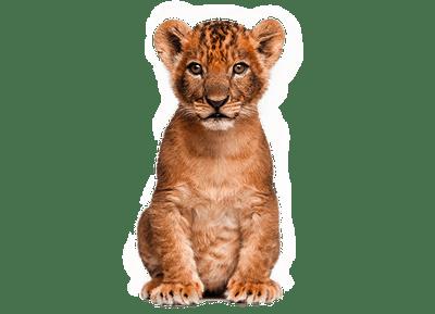 Rk Editing Png Cb Edits Png Animals Wild Animal Clipart Animals