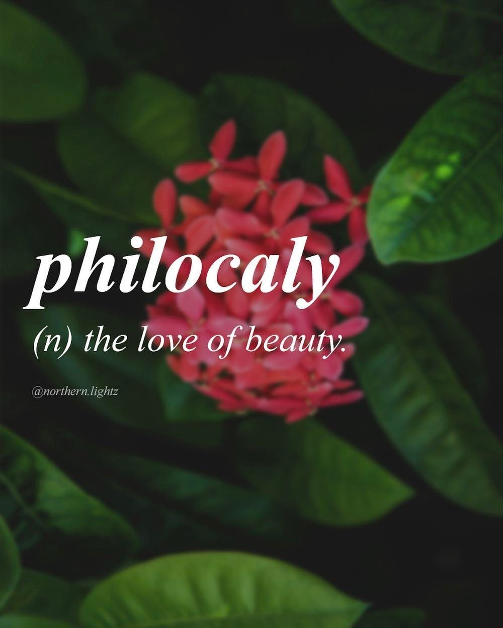 Pin By Syokat Ali On Vocabulary Uncommon Words Unusual Words