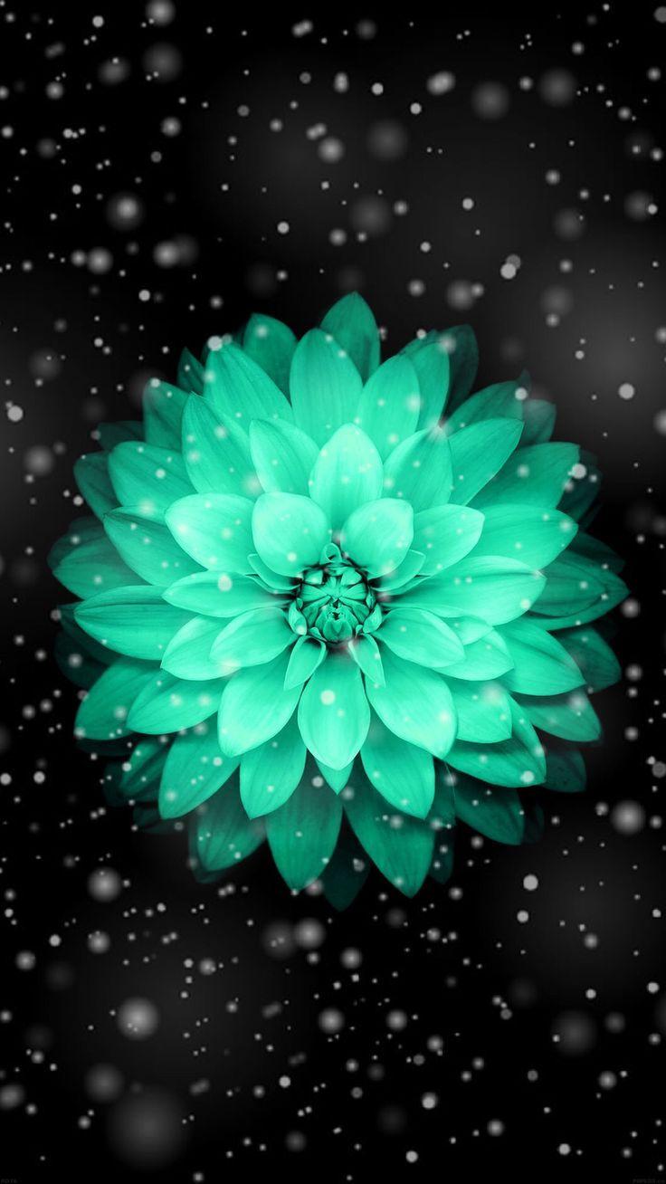 Pin By Caylisse Loudermill On Frnds Teal Flower Wallpaper Flower Iphone Wallpaper Pretty Wallpapers