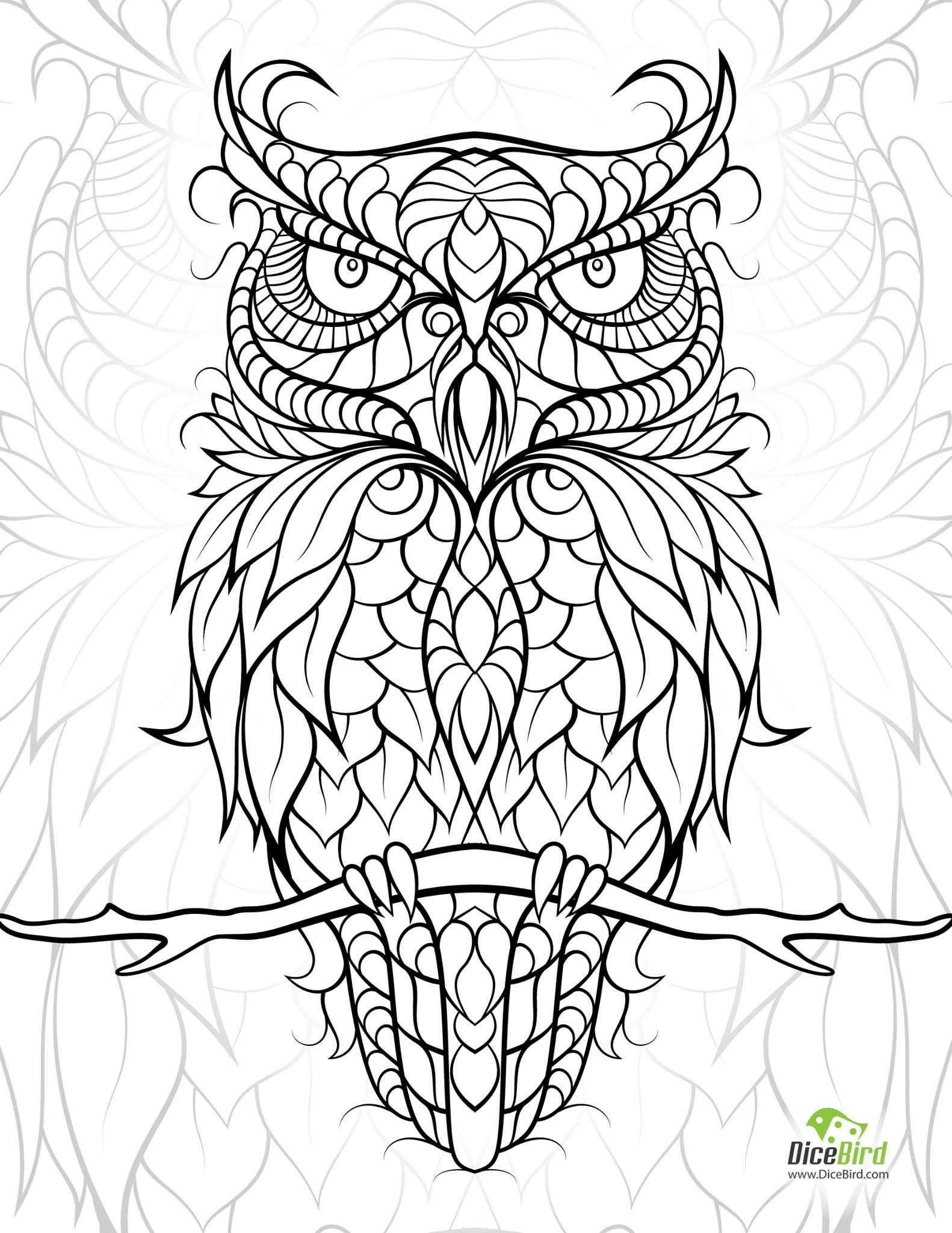 owl colouring page mehr - Printable Owl Coloring Pages For Adults