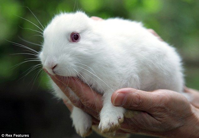 Fresh fears over a nuclear leak at the tsunami-ravaged Fukushima plant have re-ignited after a rabbit born close to the facility was discovered with no ears.