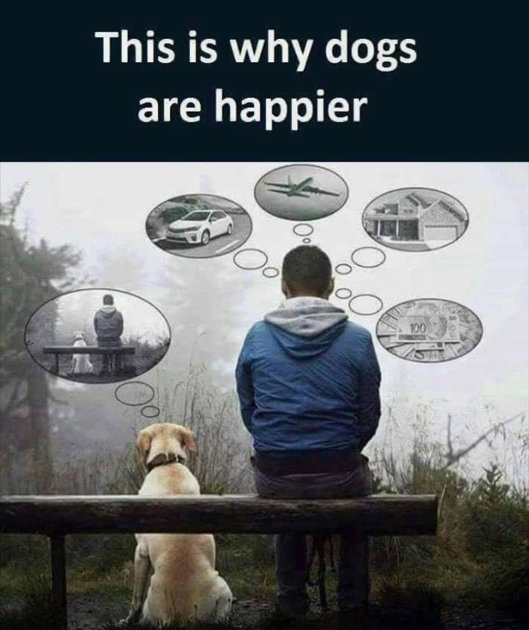 Why dogs are happy   Art and things like it   Dogs, Dog