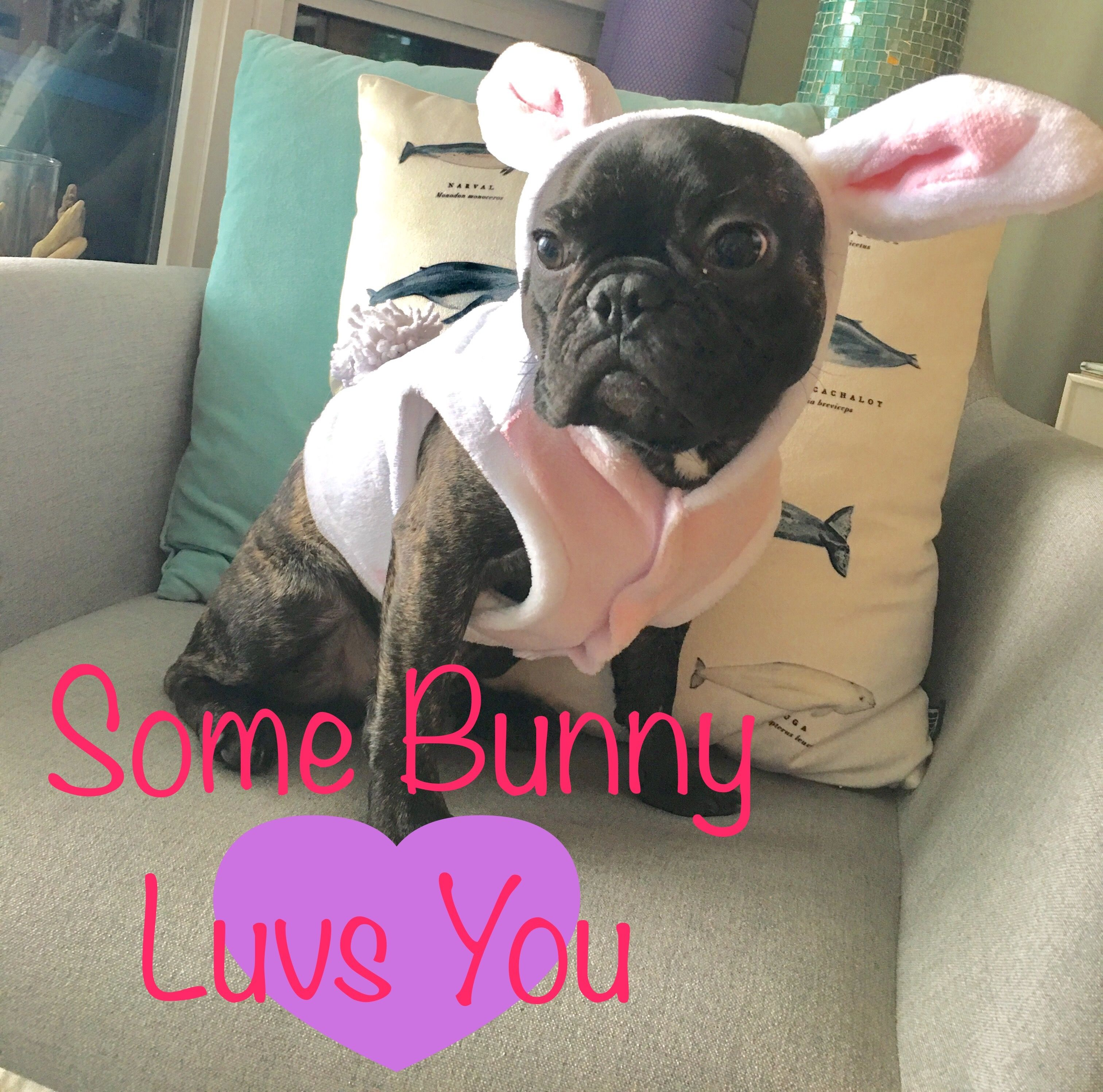 Happy Easter French Bulldog Mr Robert Frenchie Love French