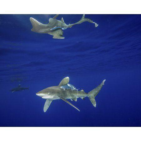 11++ Lava sharks ideas in 2021