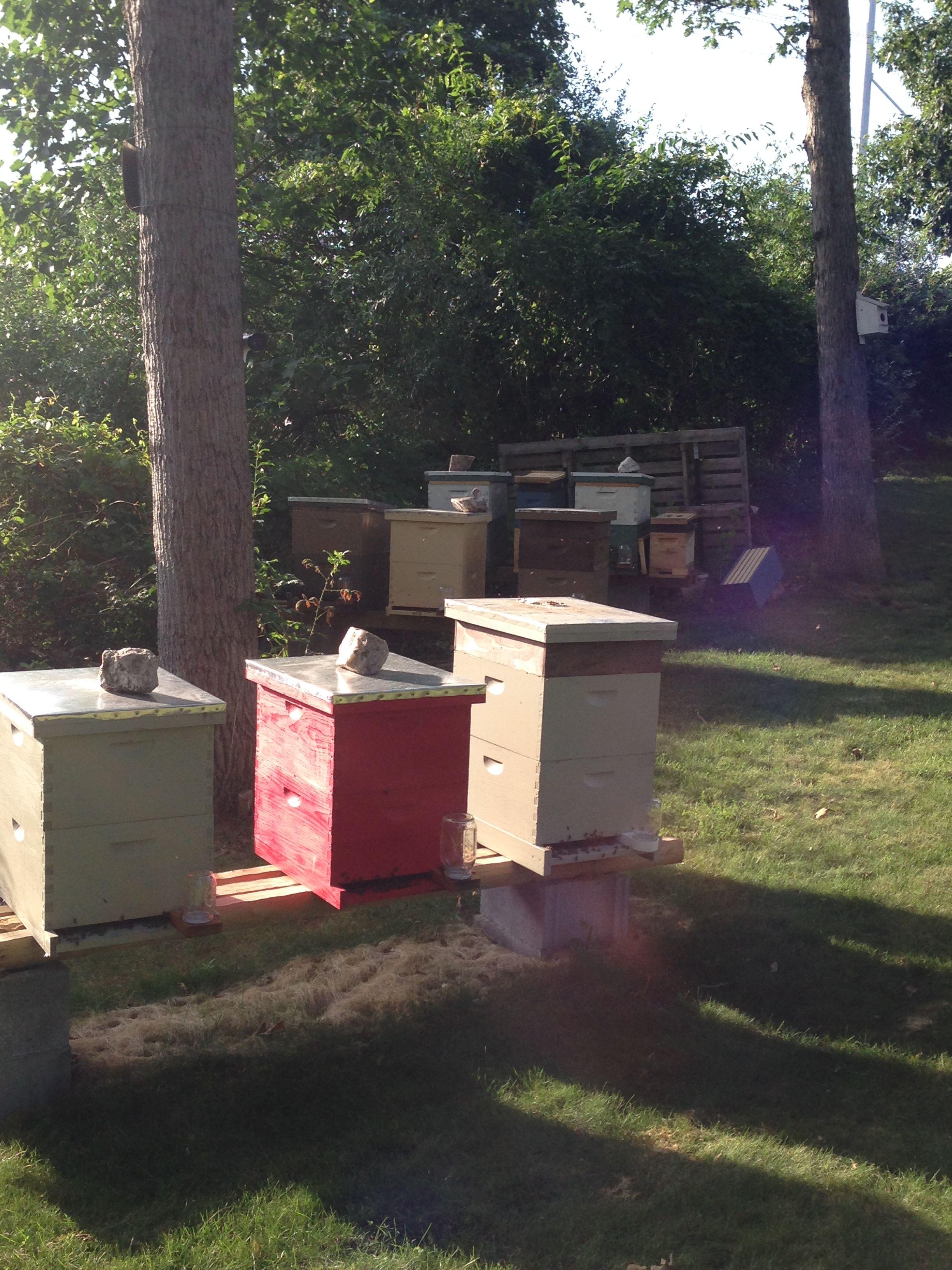 Pin by SweetSophiaLLC on Beekeeping Bee keeping, Jenga, Toys