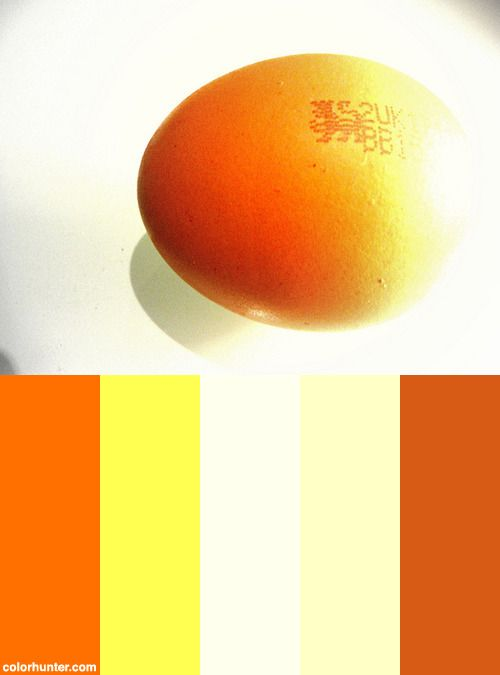 Over Exposed Egg Color Scheme from colorhunter.com