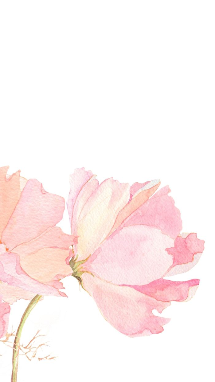 Pink Watercolour Floral Flowers Iphone Phone Wallpaper Background Lock Screen