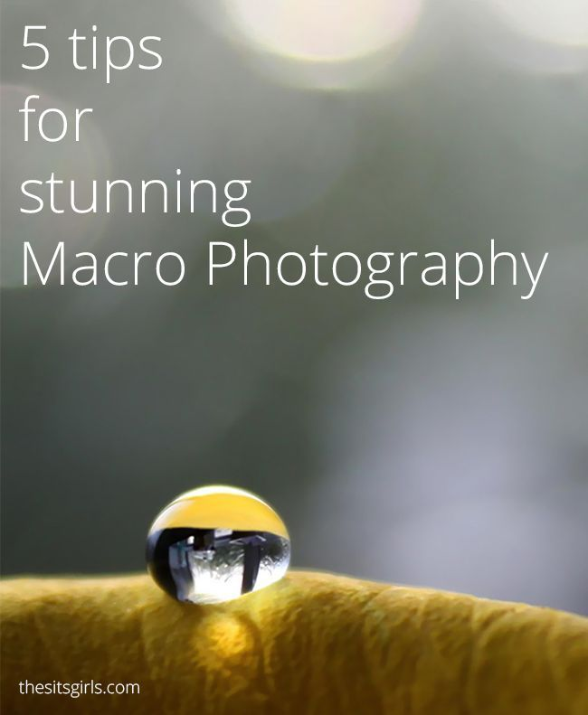 Photography Tips   Macro Photography   5 tips for taking stunning ...