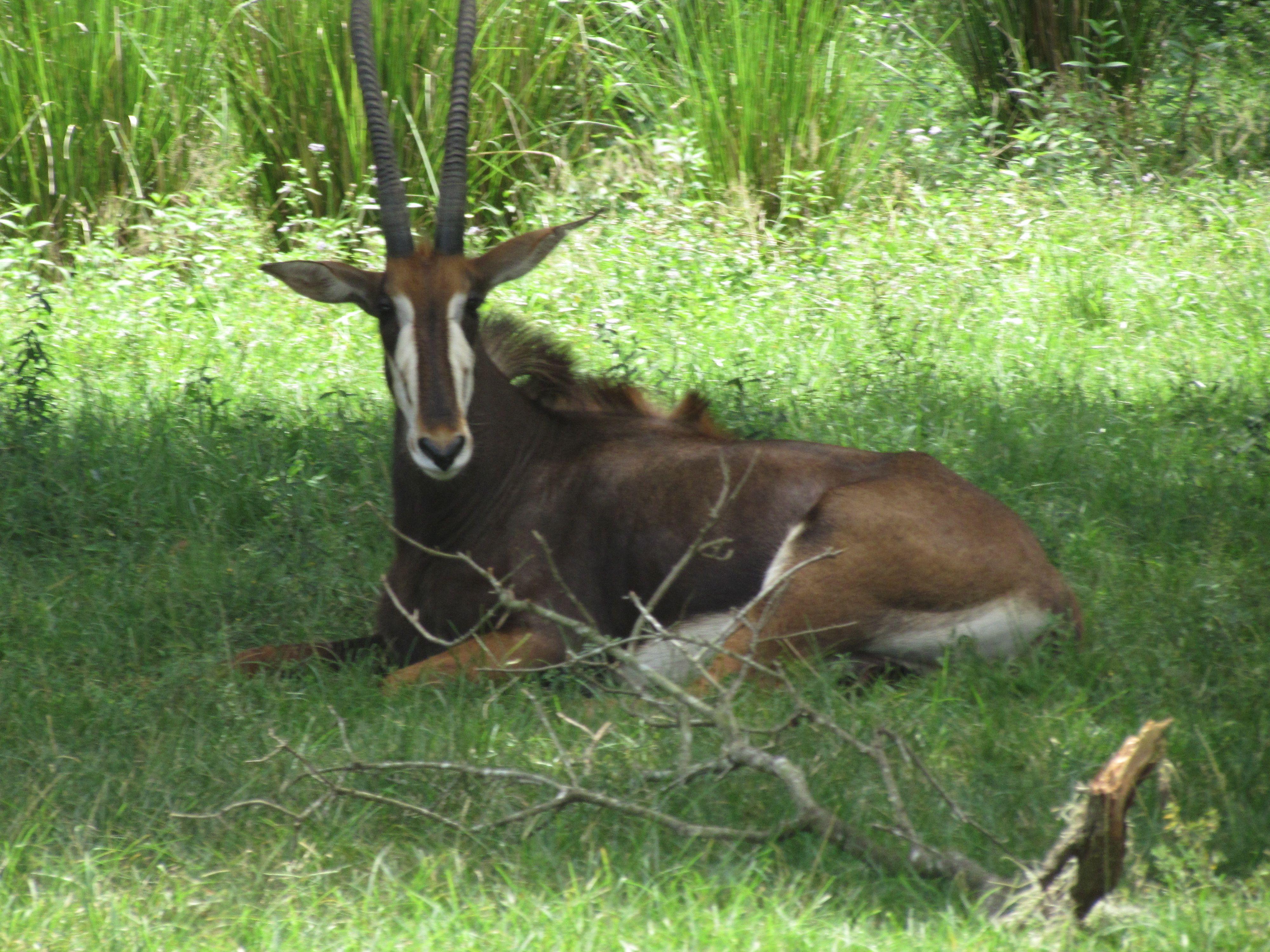 Algunos animales pasan el día echados en el suelo comiendo y observando sus alrededores queriendo saber que es lo que pasa en el exterior.