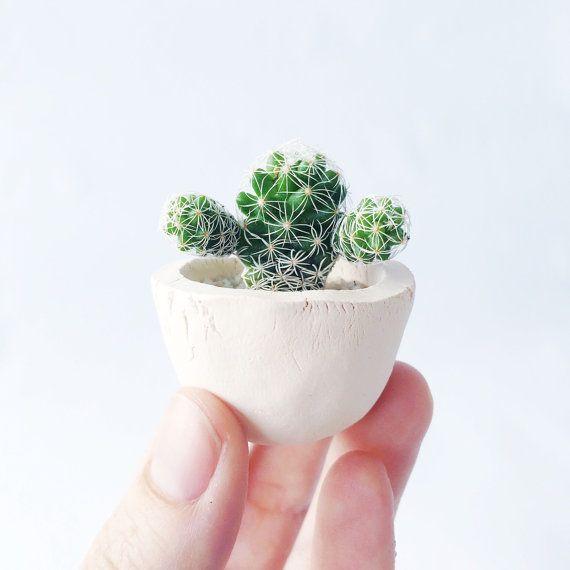 Thimble Cactus And Mini White Ceramic Cactus Cup Planter Mini Cactus Cactus Planter Handmade Ceramic Planters