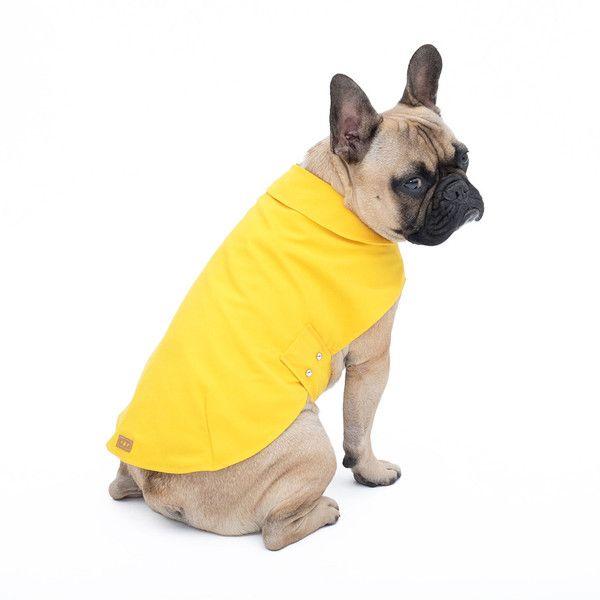 Dog Raincoat3 Colourssighthoundsgreyhoundsgalgo Dog Dog Raincoat3 Raincoat3 Dog Colourssighthoundsgreyhoundsgalgo Colourssighthoundsgreyhoundsgalgo Raincoat3 Nk8nZwOPX0