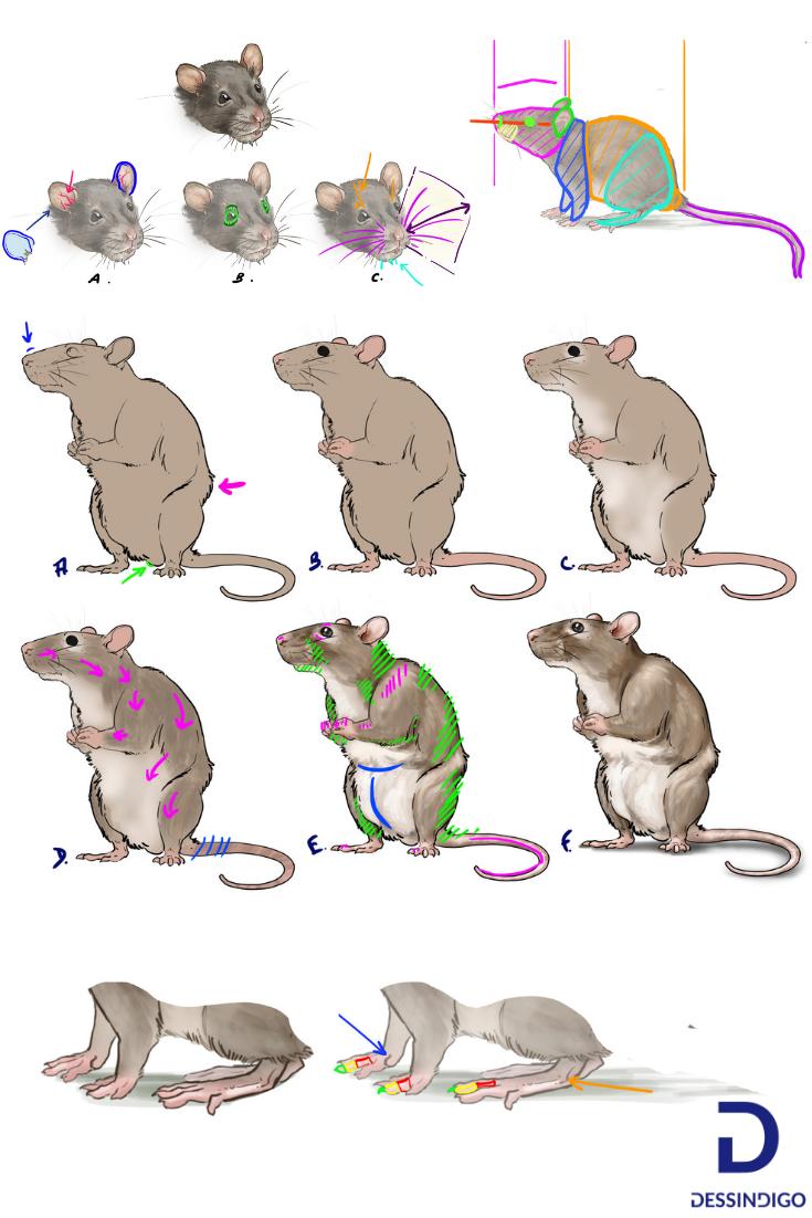 Comment Dessiner Un Rat Dessin Rat Dessin Et Petit Dessin