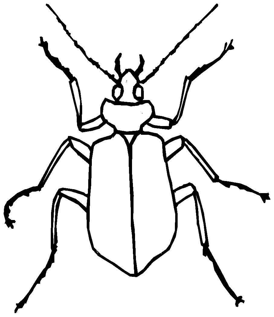 Раскраски с жуками: распечатать или скачать бесплатно | Printonic.ru | 1049x907