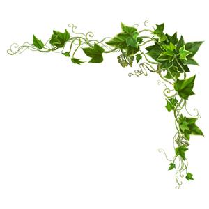 Drawing Vine Border Google Search Vines Flower Painting Flower Border