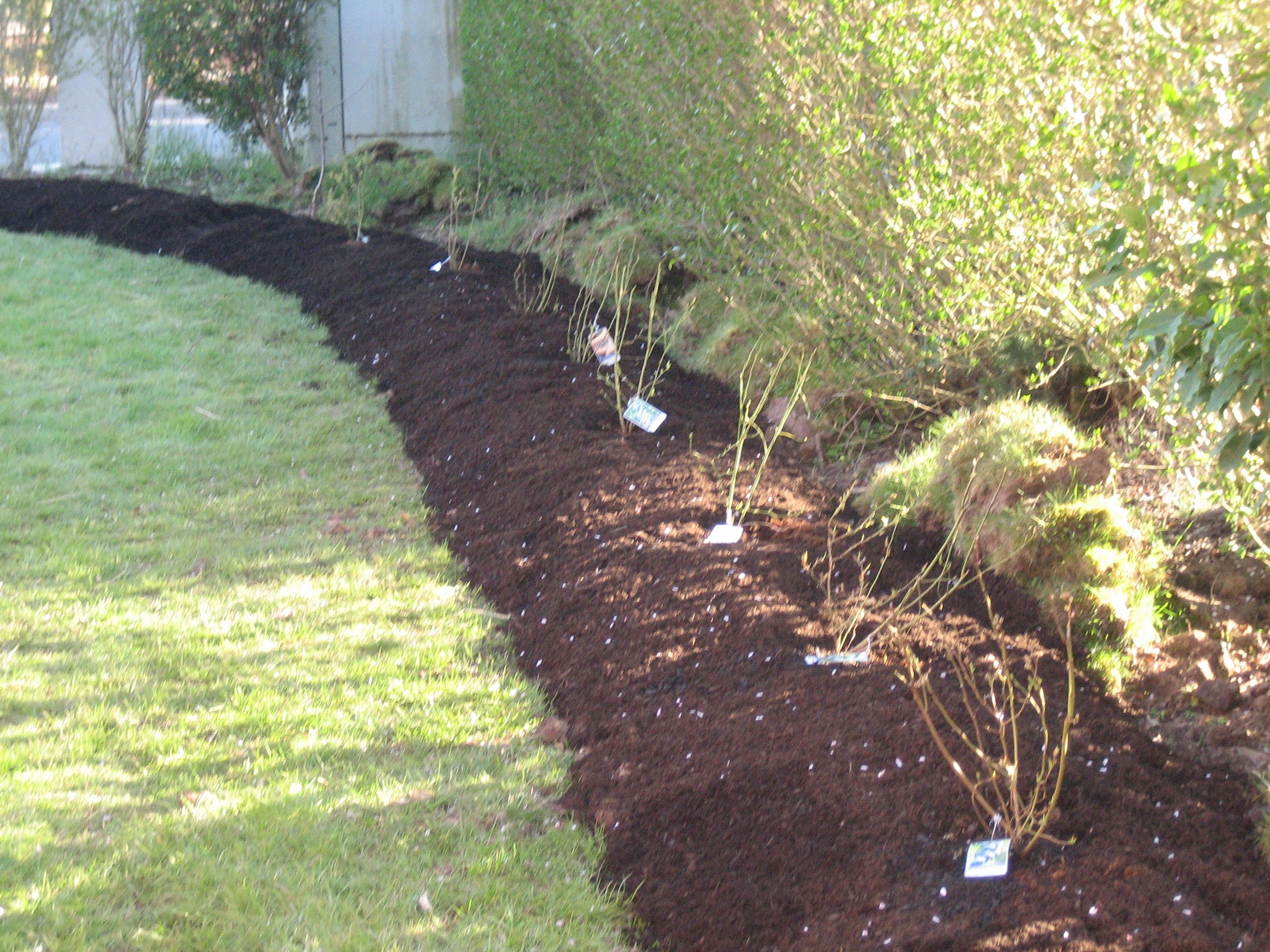 how to prepare soil for planting a hedge