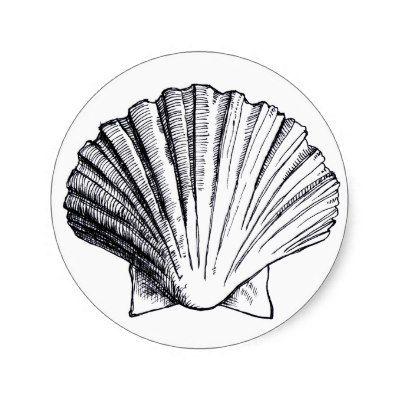 Black and White Seashells Drawings | Seashell Drawing ...
