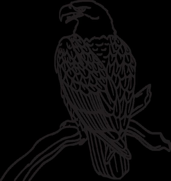333RA - Eagle on branch | stencils | Pinterest