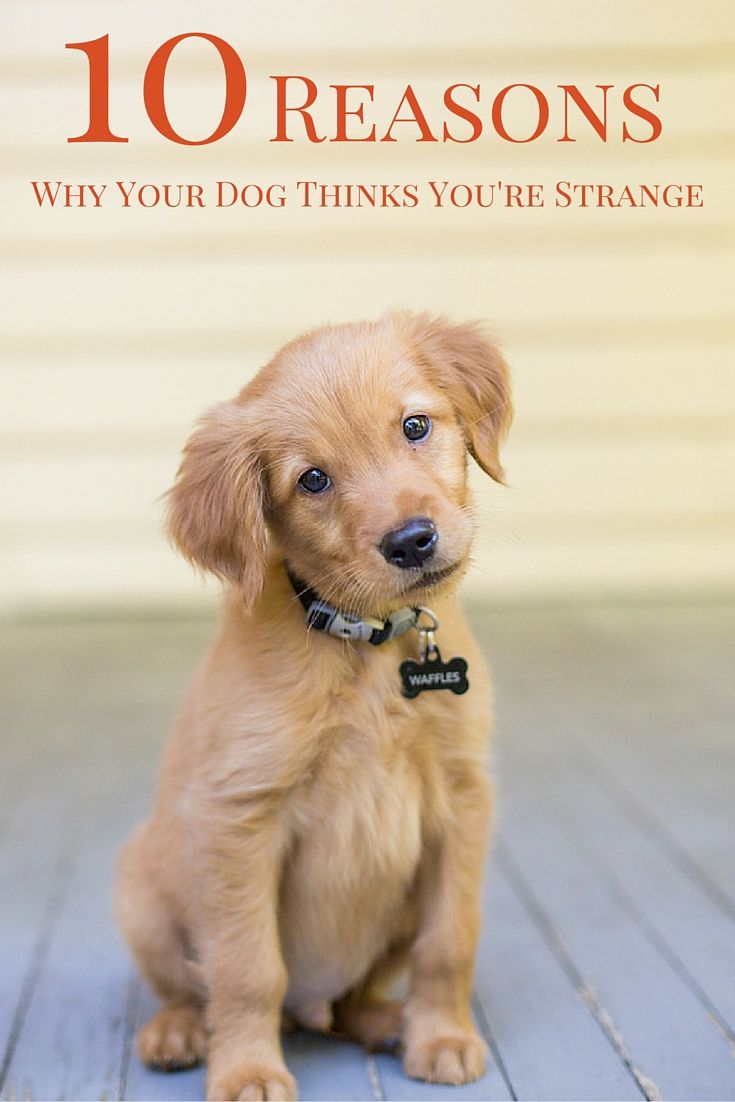 Some human behaviors are just plain strange to our canine