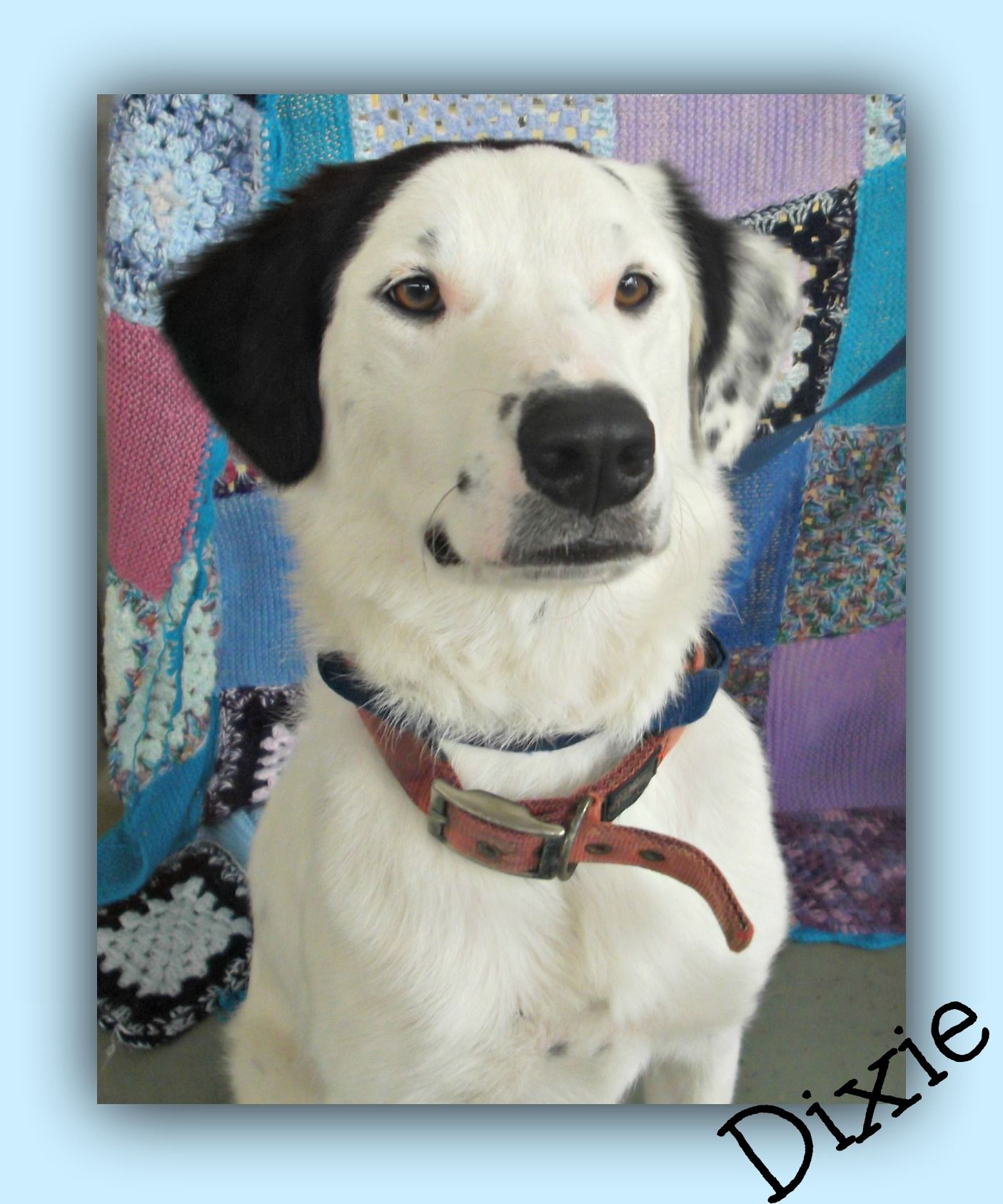 Dixie Here Was Born At The Gympie Rspca Animal Care Centre She